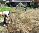 麦刈り(7月)通常の野菜作りと違って収穫後の脱穀から製粉までの工程が正直大変でした。