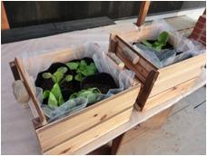 家の中でも野菜を栽培できる木製プランターを作ってみました。