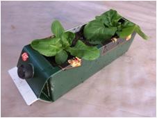 焼酎の紙パックでもサラダ菜を栽培中。酒を呑む時は野菜も摂りましょう。
