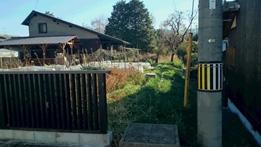 菜園の柵のスキ間から侵入してきます。