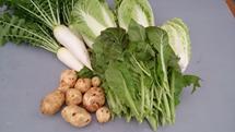 虫に喰われて穴だらけですが今日もダイコン、白菜、ジャガイモ、高菜が獲れました